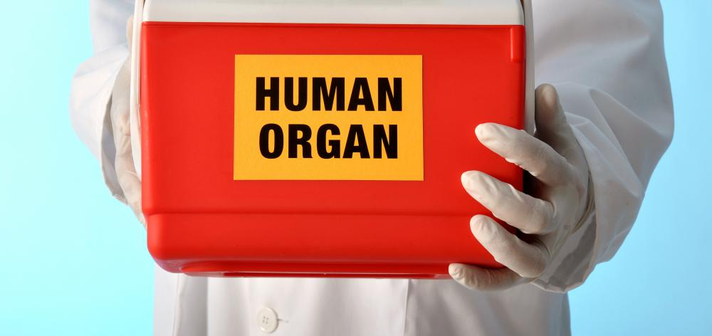 Many researchers believe that by using stem cells, entire organs can eventually be regenerated.