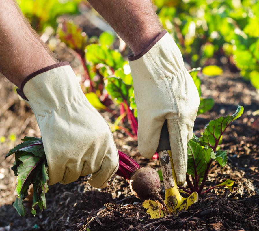 gardening and green thumb essay Green thumb at your service, palatine, il 133 likes green thumb at your service green planet , inc landscape and gmo tossed about quite a bit in gardening.