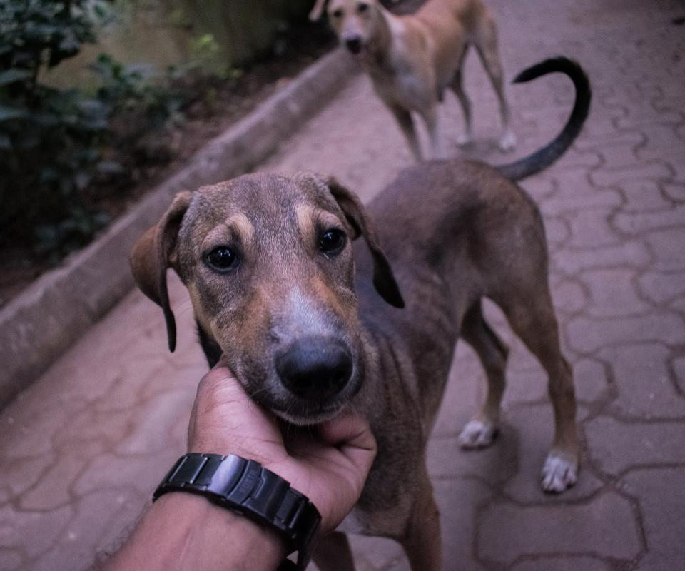 Even stray dogs have the ability to recognize basic human hand gestures.