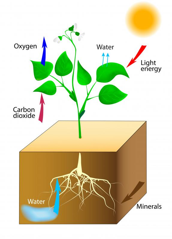 Plants absorb energy from sunlight and transfer it to ADP and inorganic phosphate.