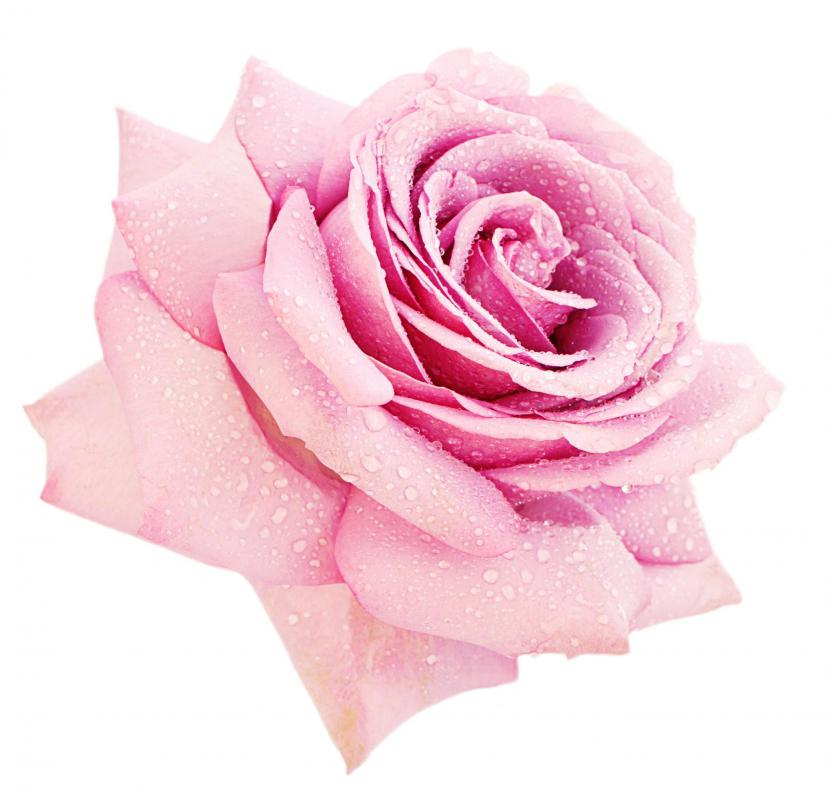 Pink roses may be used for elegant vase centerpieces.
