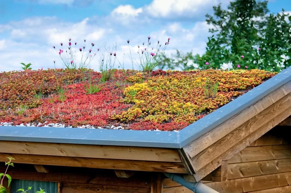 Green roofs, which insulate and reduce the amount of impervious surface, are one green building technique.
