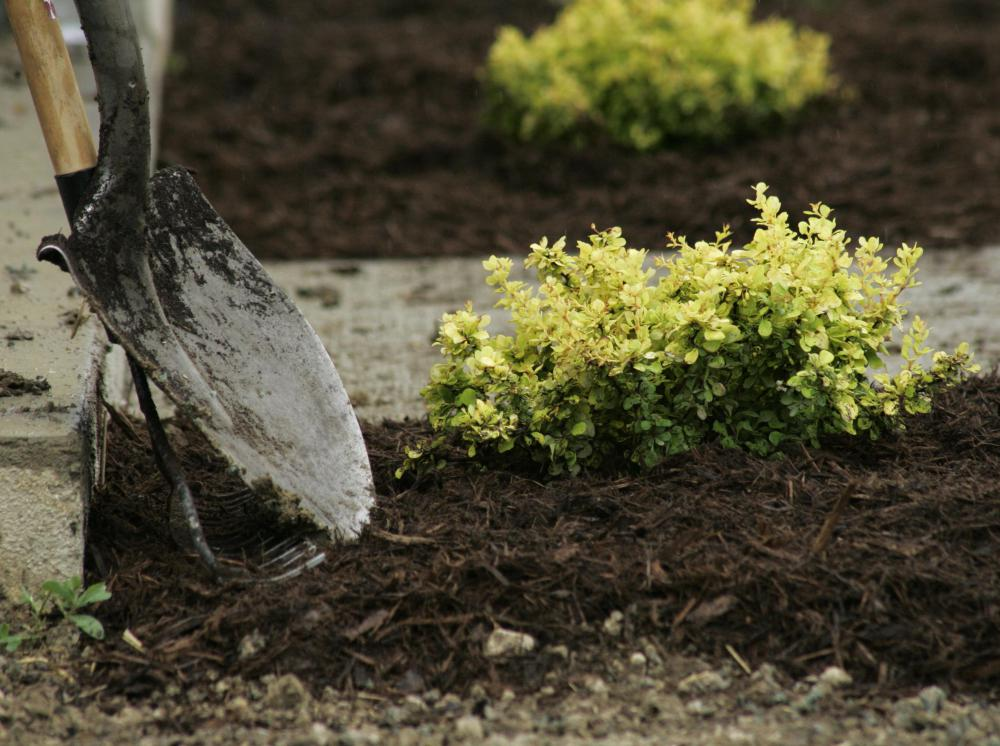 Organic mulch is typically spread around flowerbeds and shrubbery beds.