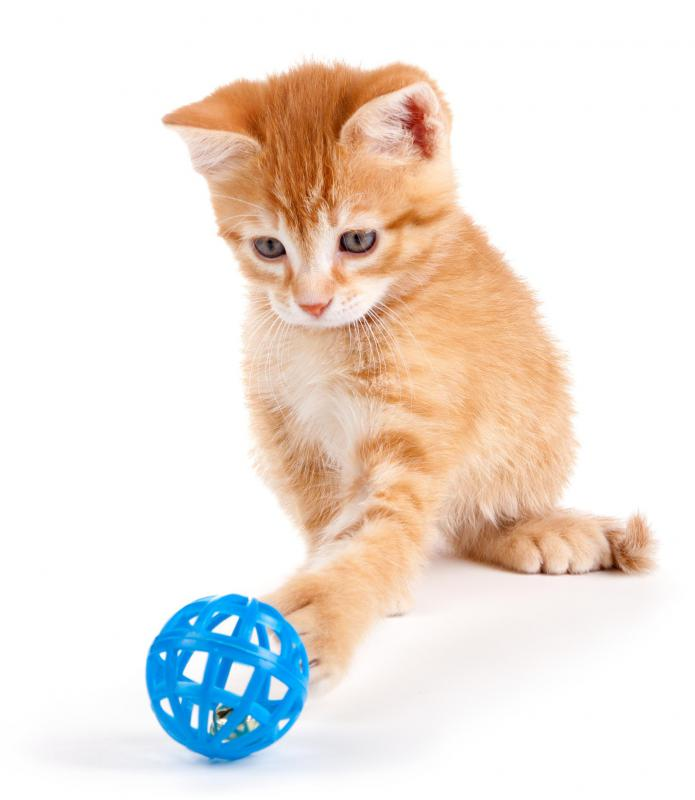 Some cats love chasing a ball rolled across the floor.