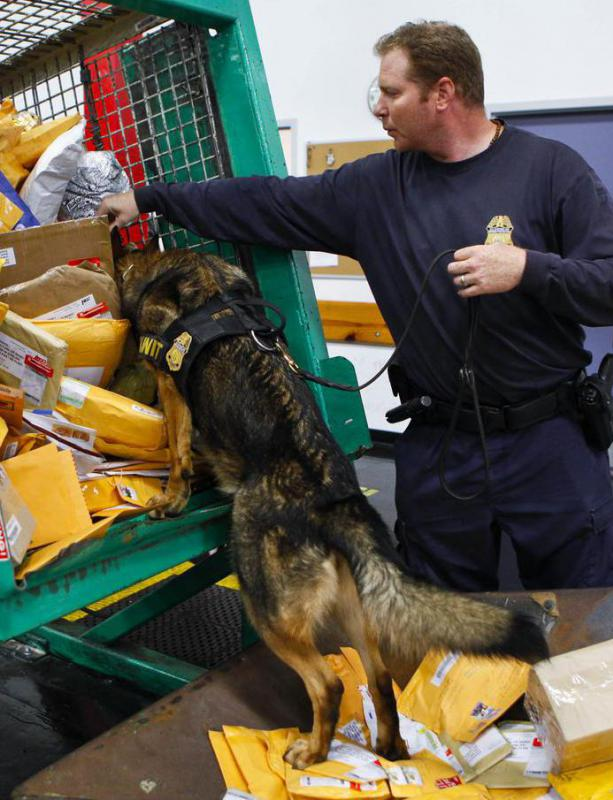 A K9, or police dog, may help inspect mail for dangerous materials.