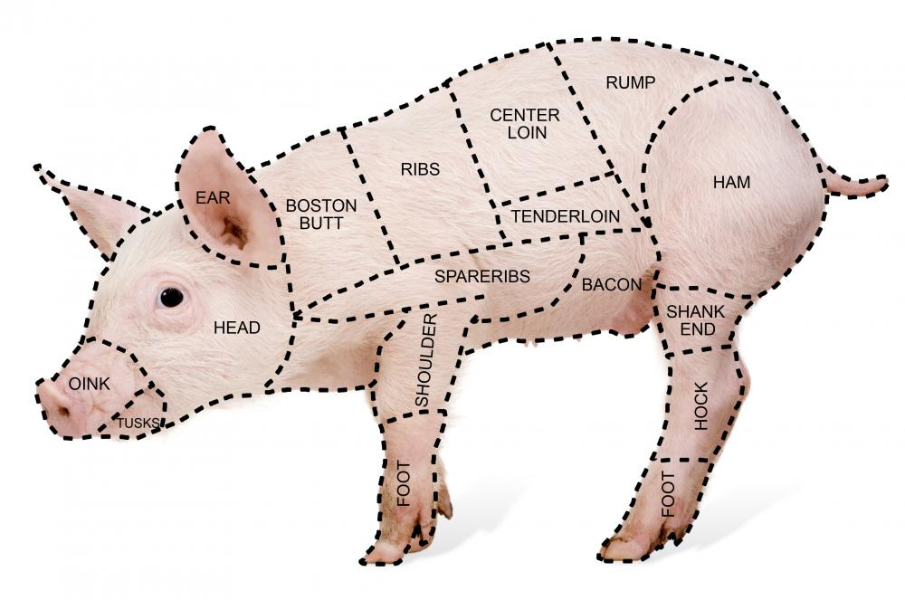 Parts Of Pig Loin http://morewin-media.de/maus/pork-parts-diagram