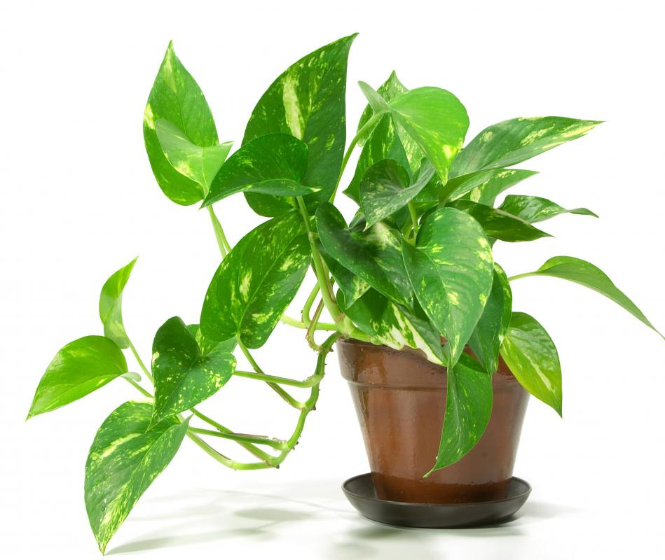 Potted plants need more nutrients than regular garden soil can provide so they can flourish indoors.
