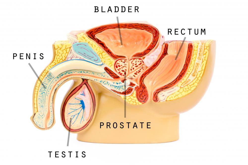 Circulatory problems in the testes may cause abnormal sperm.