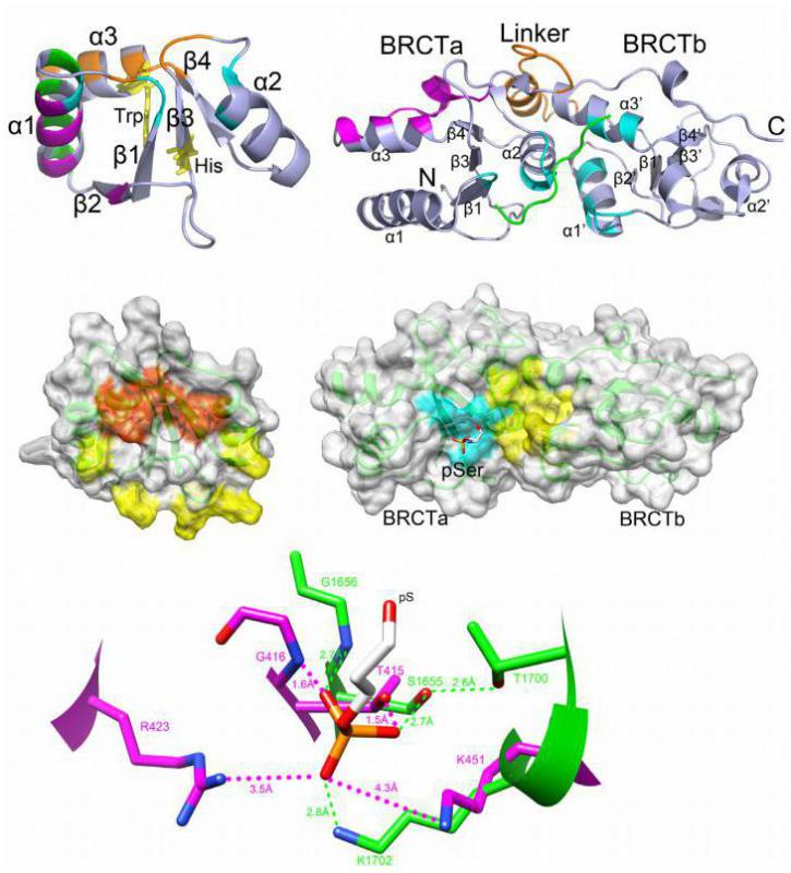 What Is Protein Binding? (with Pictures