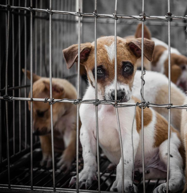 Animal cruelty laws may help prevent unscrupulous breeders.