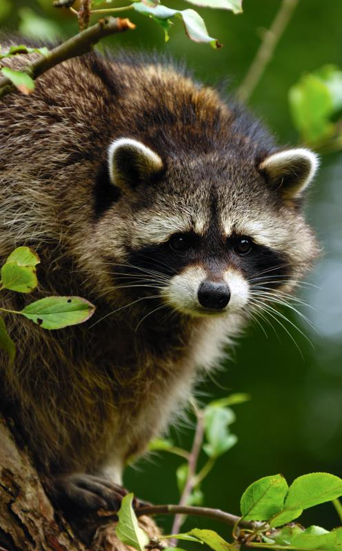 Clearcutting can force animals to seek new habitats.