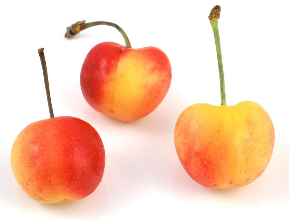 Rainier cherries are drupes.