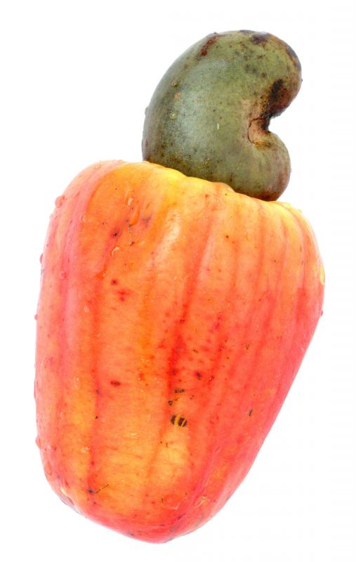 A raw cashew. Raw cashews contain a compound that can cause skin rashes and can be toxic when ingested.