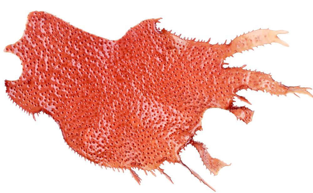 What is Red Algae? (with pictures)