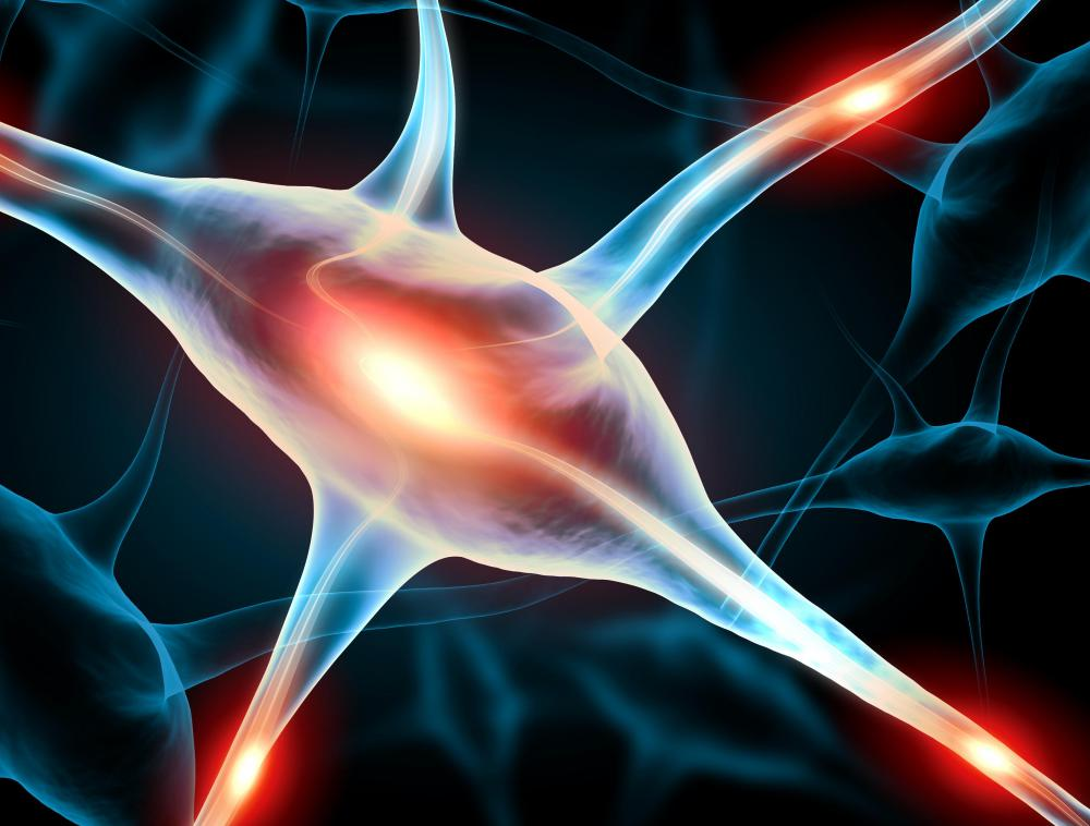 Neuron are transmitters of chemical and electrical data.