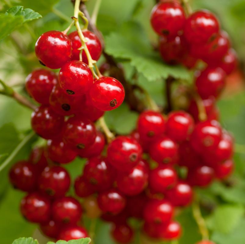Currants are a popular addition to hot banana cereal.