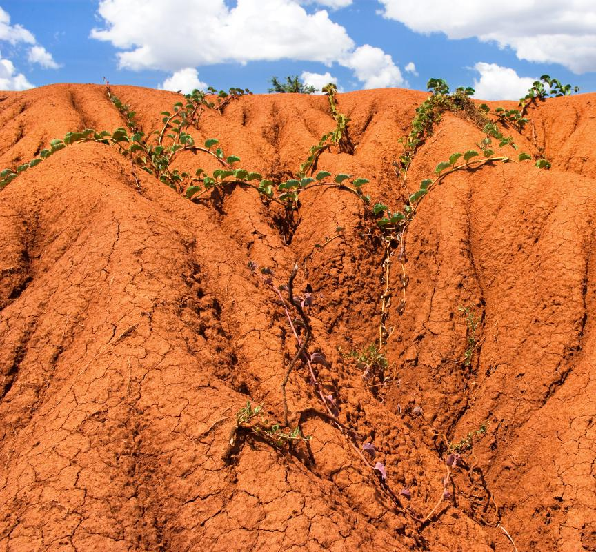 Clay soil often is red and is thick and sticky when wet.
