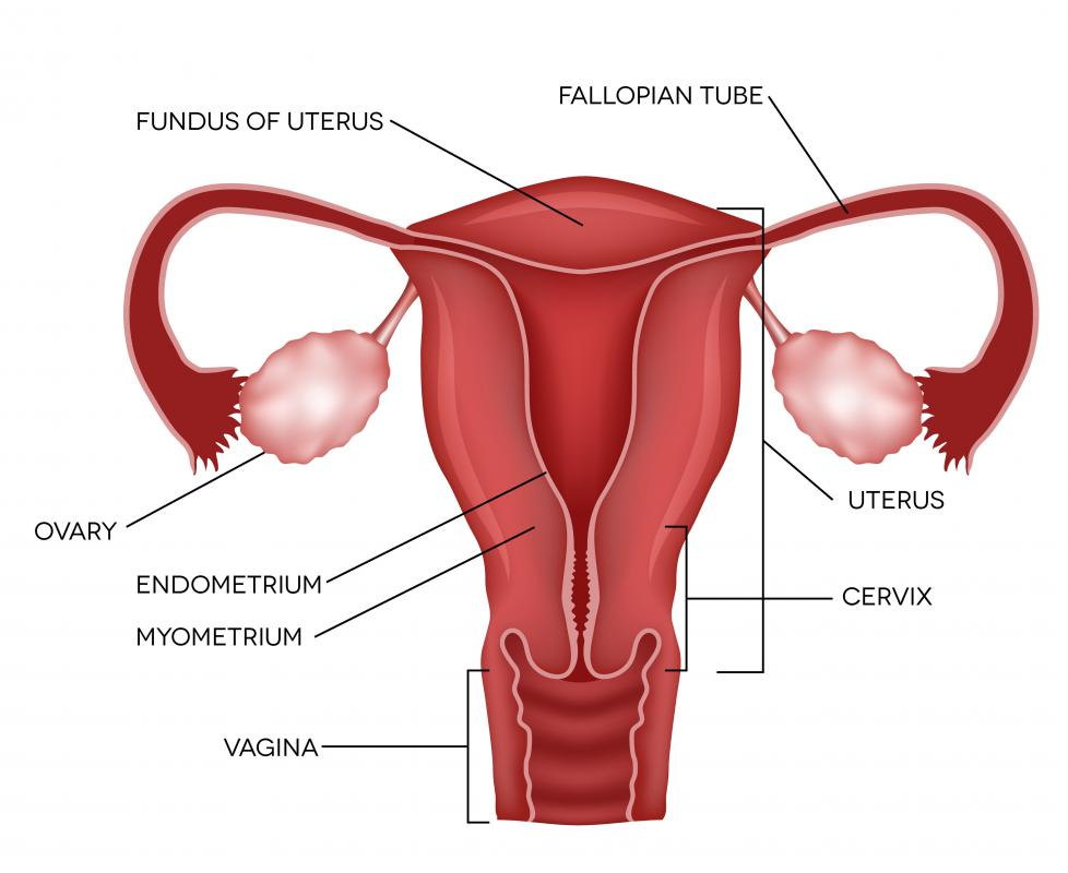 Uterine Prolapse Pessary What is a Pessary