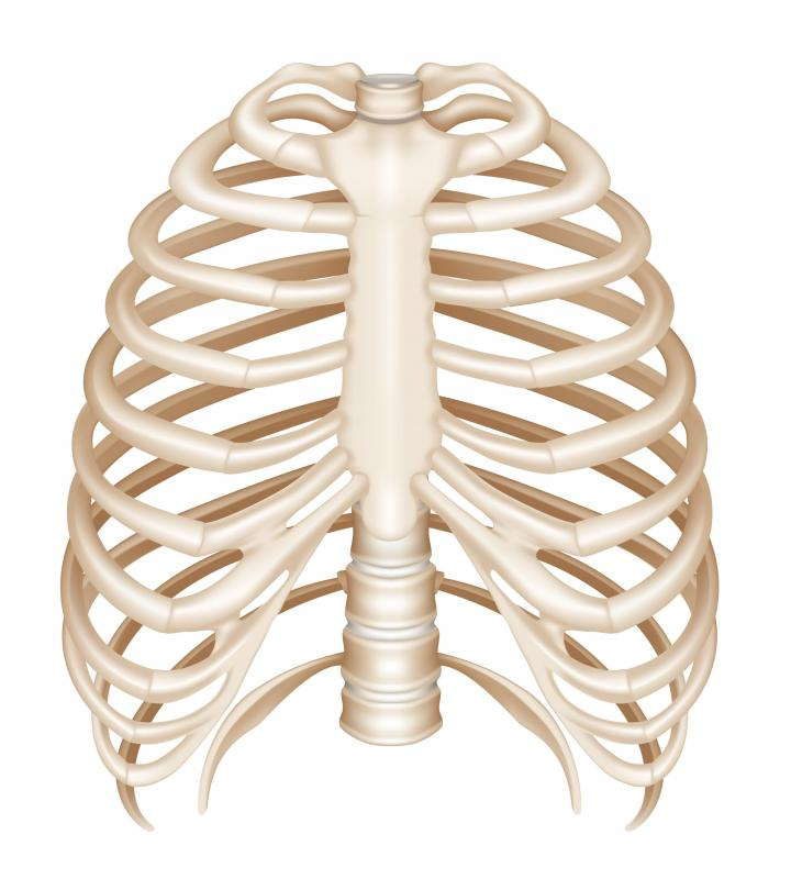 The sternum, or breast bone, connects each side of the rib cage.