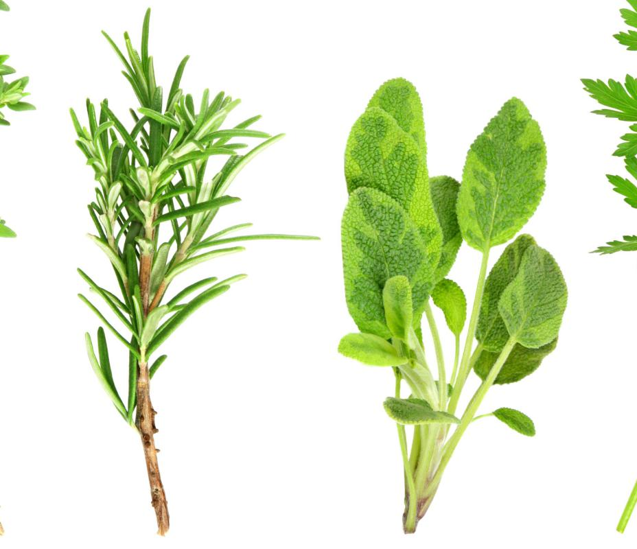 What Are the Different Types of Herbs with pictures