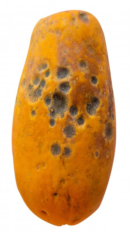 Overwatering and poor soil drainage may cause rotten papayas.