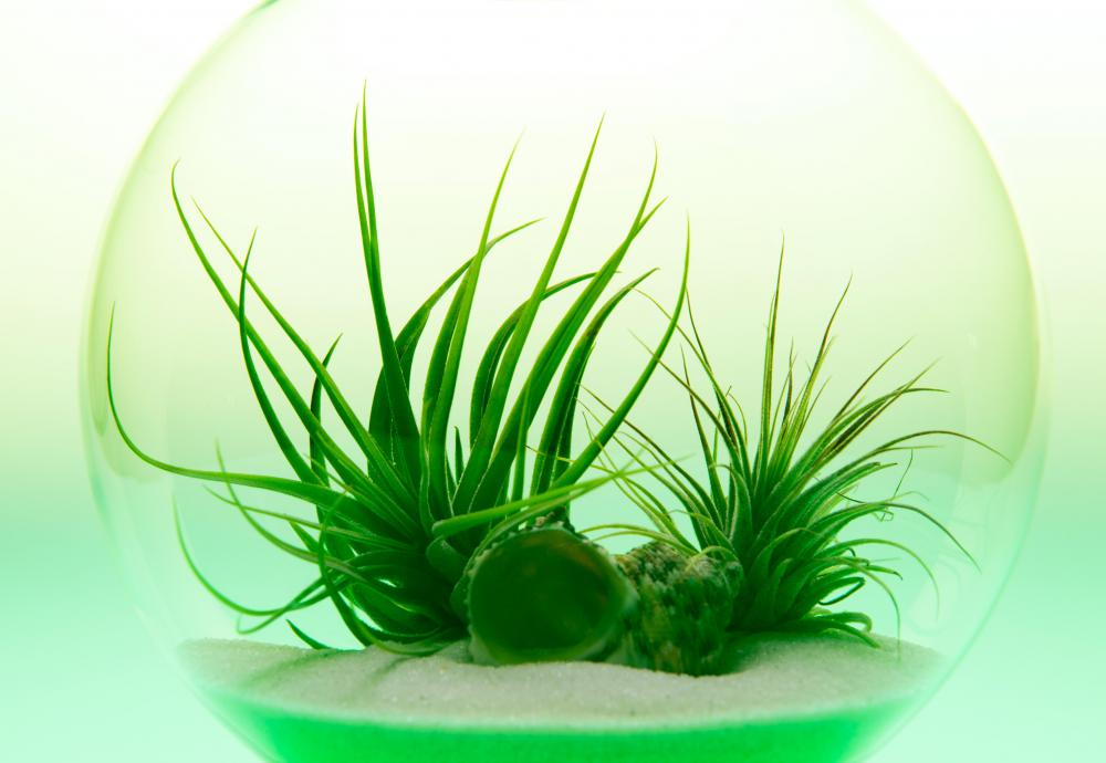 Terrariums are commonly used to hold flora that thrives in dry habitats.