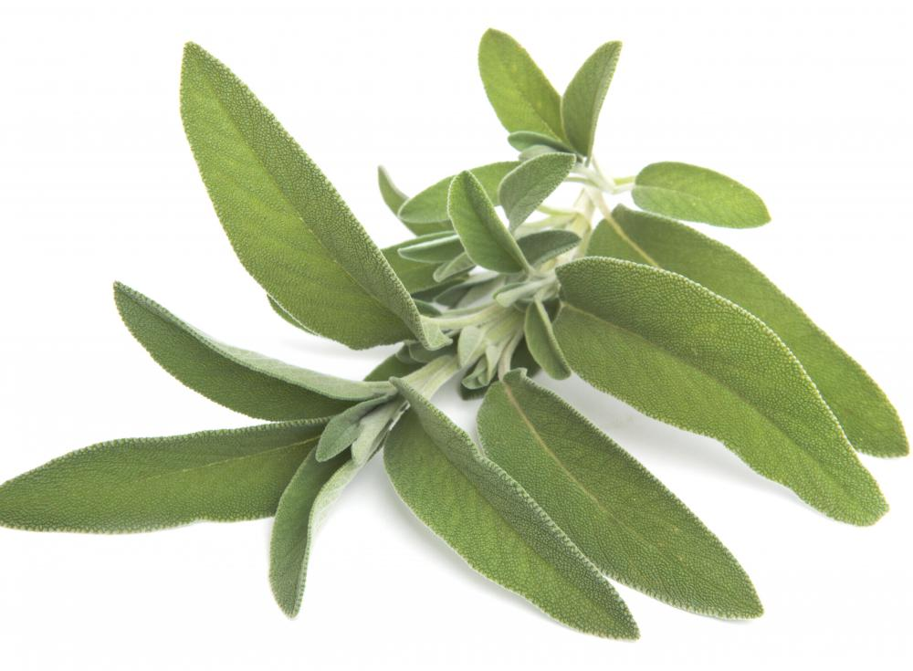 A stem of sage leaves.