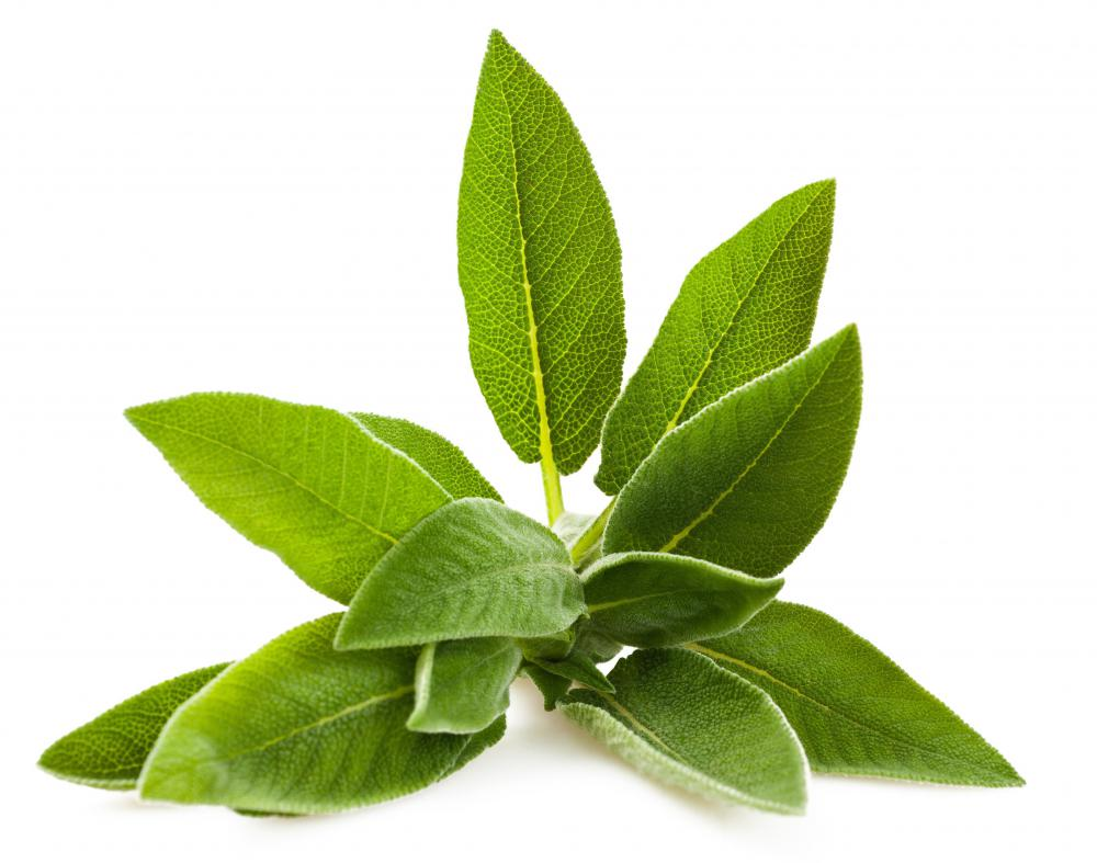 Sage leaves come from a Mediterannean plant.