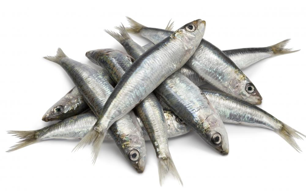 Sardines, also call pilchards, are a type of small fish in the herring family.