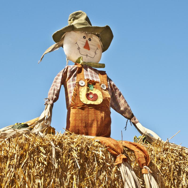 A scarecrow might scare away ravens for awhile.