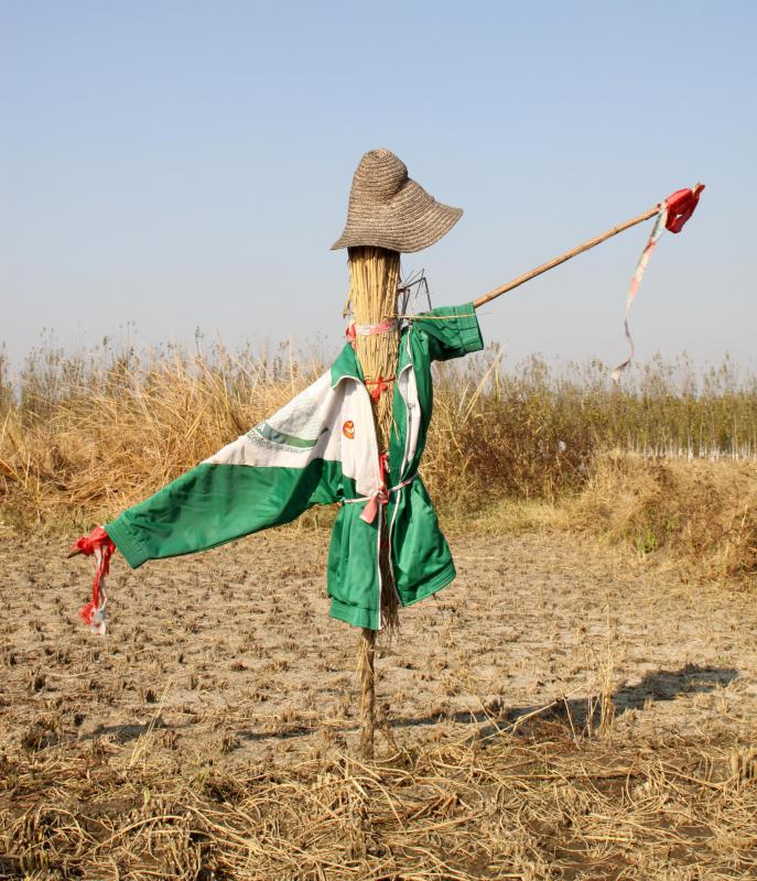 Crows Used Cars Crowsusedcars: Do Scarecrows Really Scare Birds? (with Pictures