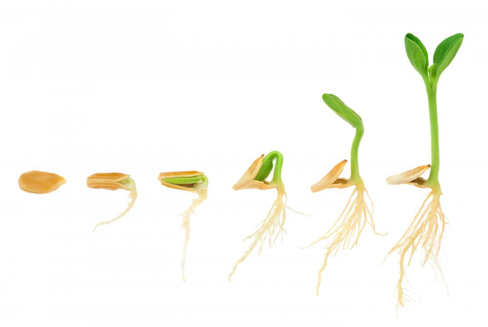 Germination refers to the sprouting of a seed.
