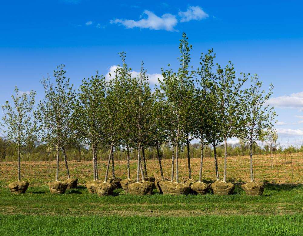 Late summer or early fall is generally the best time to plant trees.