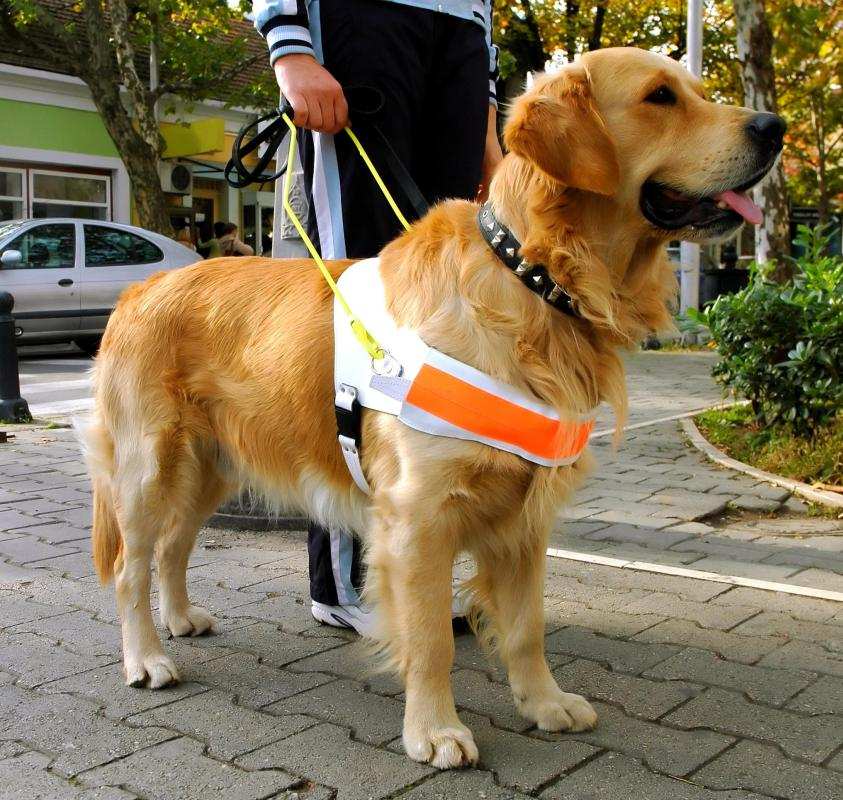 Someone who meets the legal definition of blind might be able to receive a seeing eye dog.