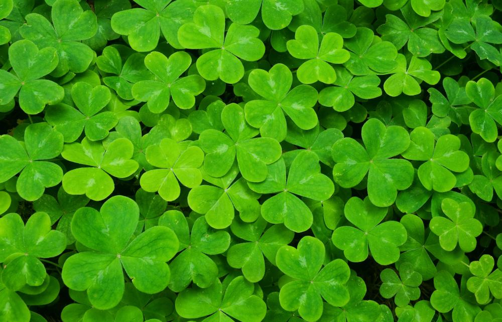 Houseplants may include shamrocks.
