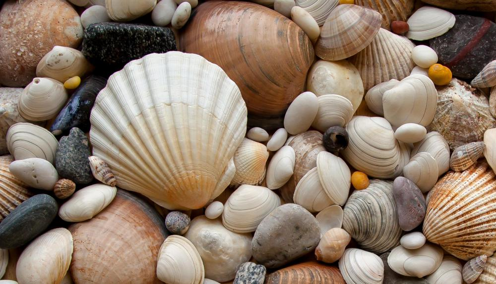 The addition of seashells can create an attractive centerpiece.