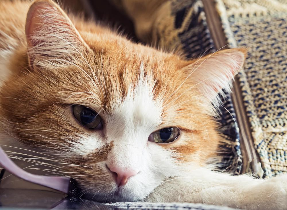 A sick cat may be lethargic or depressed.