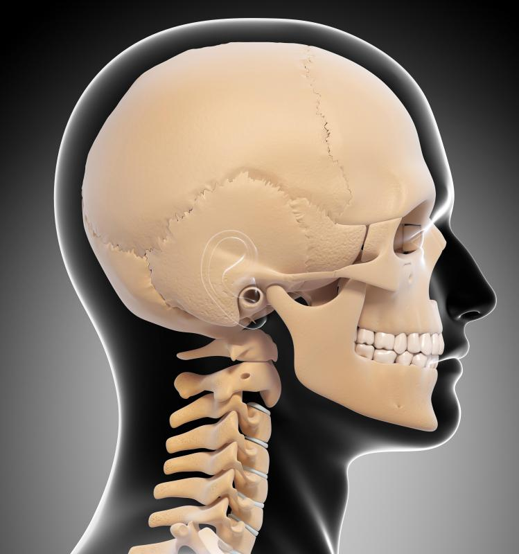The gradual fusing of the skull may be used to judge a person's age.