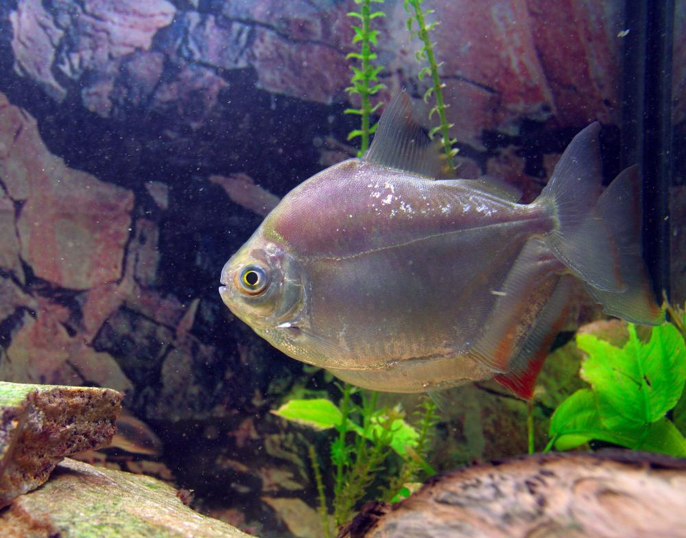 Aquariums that are too small or crowded can cause stress to the fish they hold.