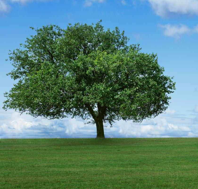 Trees are prime candidates for time-released fertilizers.