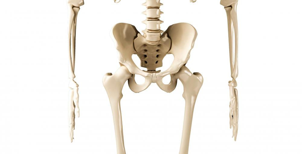 The female pelvis is typically wider than the male pelvis.