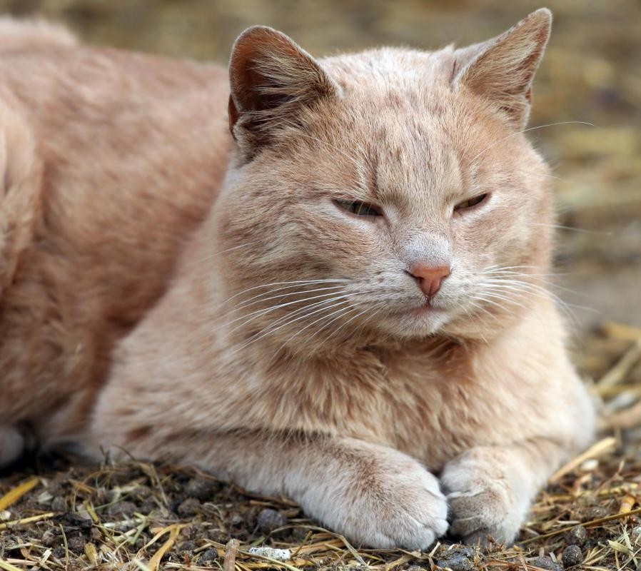 It is easiest to trim a cat's claws when the cat is sleepy.