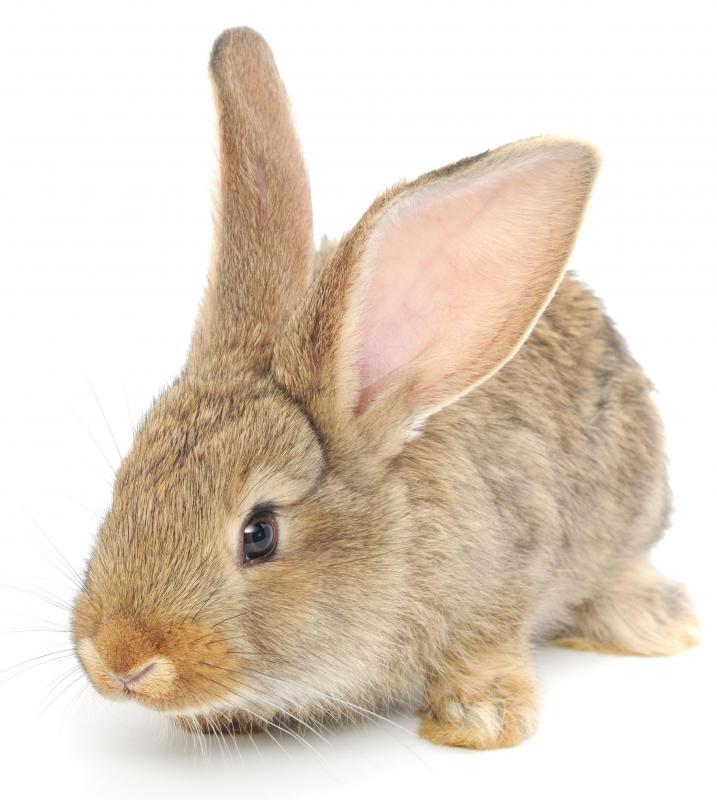 Rabbit serum has been used for biological research.
