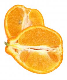 Minneola tangelos are hybrids between white grapefruits and tangerines.