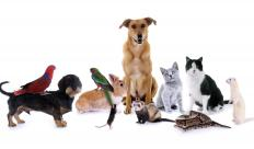 Animal lovers may work as pet sitters as a side business.