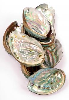 Abalone shells with mother of pearl, which can be used to make thimbles.