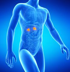 The adrenal glands produce adrenal androgens, a type of androgenic hormone.