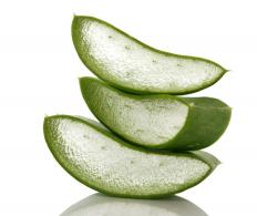 Aloe vera, which is known for producing a gel that can treat burns, is a one potted plant that is easy to care for.