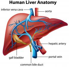 Some benign liver tumors may affect the bile duct that leads to the gall bladder.
