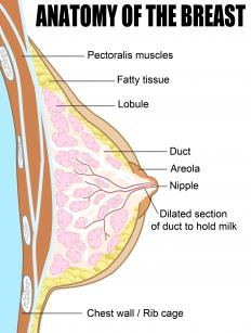 Female breasts contain several hundred lobules.